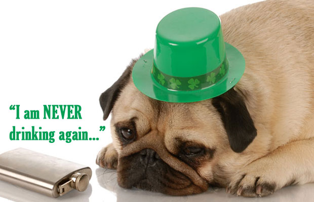 st-patricks-day-pug-hangover