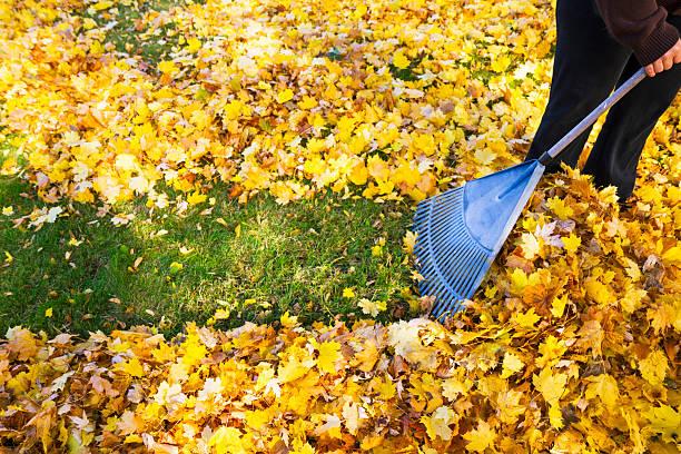 woman-raking-fall-leaves-picture-id187867594