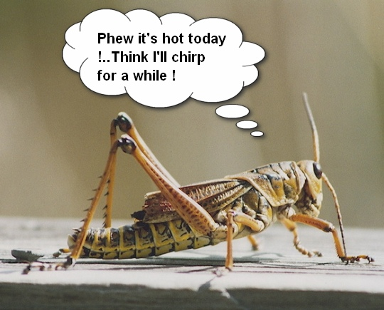 No Thermometer But You Need to Know the Temp…Listen to the Crickets!